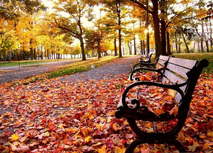 falling-leaves-wallpaper.jpg