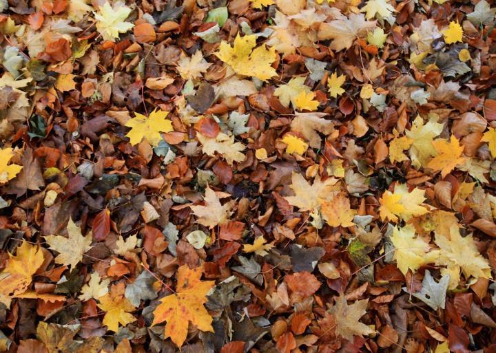 131054895-the-morning-light-illuminates-autumn-leaves-that-have.jpg.CROP.promo-xlarge2.jpg